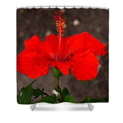 Glowing Red Hibiscus Shower Curtain