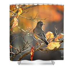 Glowing Robin 2 Shower Curtain