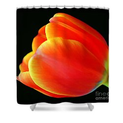 Glowing Tulip Shower Curtain by Darren Fisher