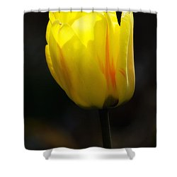 Glowing Tulip Shower Curtain by Shelly Gunderson
