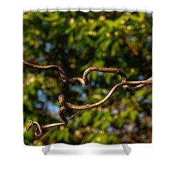 Gnarled Plant Tendrils Shower Curtain by Douglas Barnett