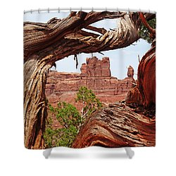 Shower Curtain featuring the photograph Gnarly Tree by Alan Socolik