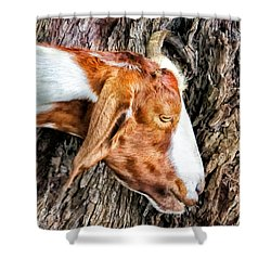 Shower Curtain featuring the photograph Goat 3 by Dawn Eshelman