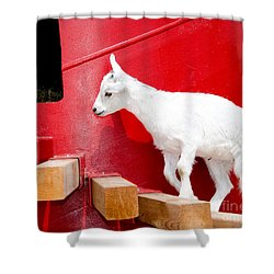 Kid's Play Shower Curtain