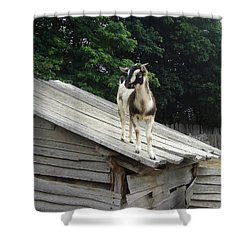 Shower Curtain featuring the photograph Goat On The Roof by Kerri Mortenson