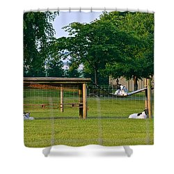 Goat Playground Shower Curtain