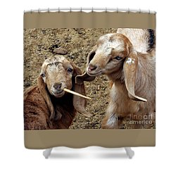 Shower Curtain featuring the photograph Goats #2 by PJ Boylan
