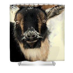 Goatstache Shower Curtain by Kathy Bassett