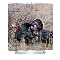 Gobbling Turkeys Shower Curtain