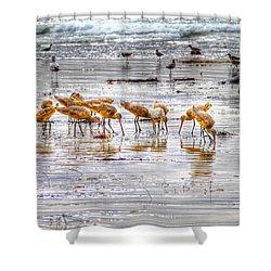 Godwits At San Elijo Beach Shower Curtain