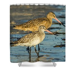 Godwits Shower Curtain