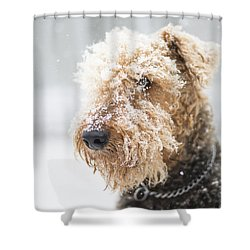 Dog's Portrait Under The Snow Shower Curtain