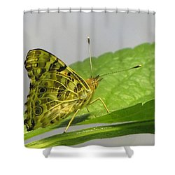 Gold And Green  Shower Curtain