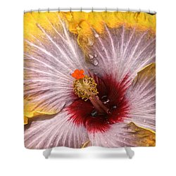 Gold And Silver And Ruby Hibiscus Close Up Shower Curtain by Byron Varvarigos