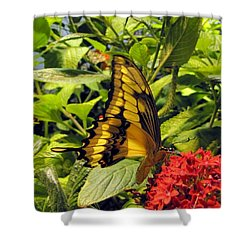 Gold Giant Swallowtail Shower Curtain