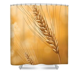 Gold Grain Shower Curtain