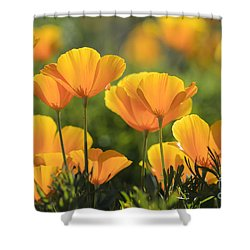 Gold Poppies Shower Curtain