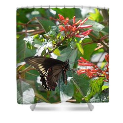 Shower Curtain featuring the photograph Gold Rim Swallowtail by Ron Davidson