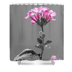 Golda Shower Curtain by Robert ONeil