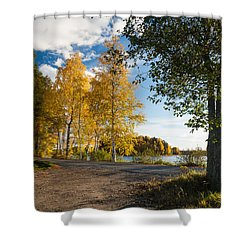 Golden Autumn Birches Shower Curtain