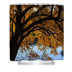 Golden Autumn Leaves Shower Curtain by Garry Gay