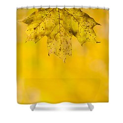Shower Curtain featuring the photograph Golden Autumn by Sebastian Musial