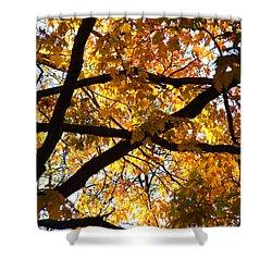 Shower Curtain featuring the photograph Golden Backlit by Kristen Fox