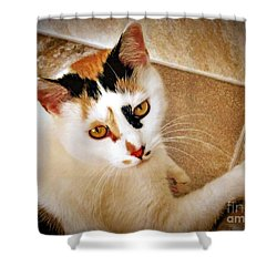 Golden Calico Shower Curtain by Phyllis Kaltenbach
