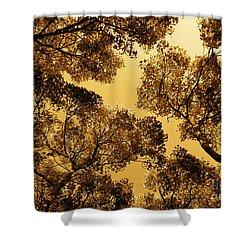 Golden Camphor Shower Curtain
