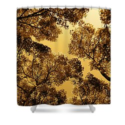 Golden Camphor Shower Curtain by CML Brown