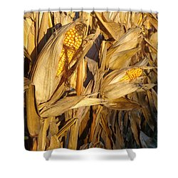 Shower Curtain featuring the photograph Golden Corn by Joseph Skompski