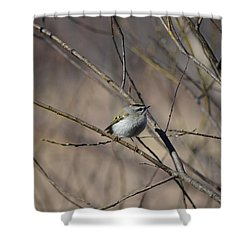Shower Curtain featuring the photograph Golden-crowned Kinglet by James Petersen