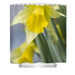 Golden Daffodils Shower Curtain by Anne Gilbert