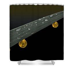 Golden Dew Shower Curtain by Angela A Stanton