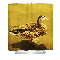 Golden Duck Shower Curtain by Nicola Nobile