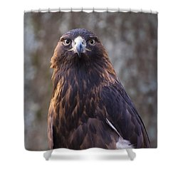Golden Eagle 4 Shower Curtain