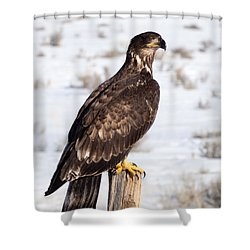 Golden Eagle On Fencepost Shower Curtain