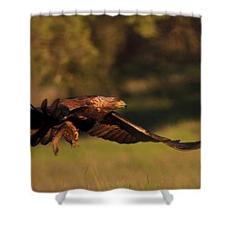 Golden Eagle On The Hunt Shower Curtain