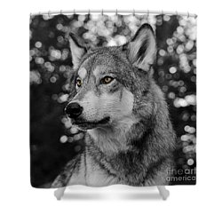 Golden Eyes Shower Curtain by Dee Cresswell