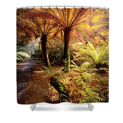 Golden Forest Shower Curtain by Ray Warren