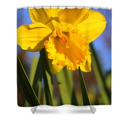 Golden Glory Daffodil Shower Curtain