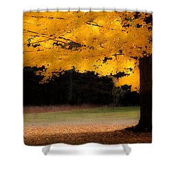 Golden Glow Of Autumn Fall Colors Shower Curtain by Jeff Folger
