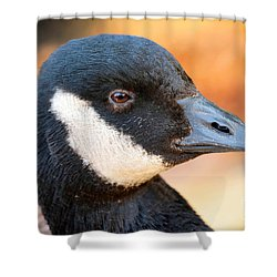 Golden Goose Shower Curtain