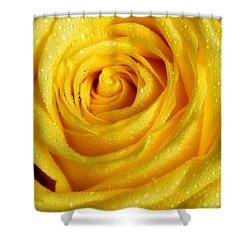 Golden Grandeur Of Nature. Yellow Rose I Shower Curtain by Jenny Rainbow