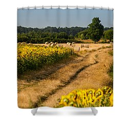 Golden Hour On Country Road Shower Curtain by Davorin Mance