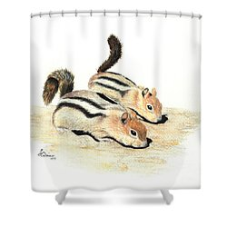 Golden-mantled Ground Squirrels Shower Curtain by Lynn Quinn