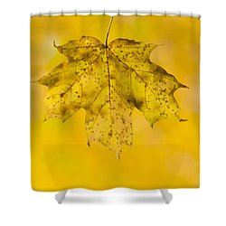 Shower Curtain featuring the photograph Golden Maple Leaf by Sebastian Musial
