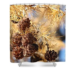 Shower Curtain featuring the photograph Golden Needles by Ann E Robson