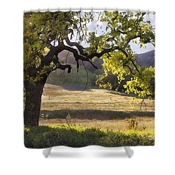 Golden Oaks Shower Curtain by Sharon Foster