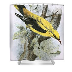 Golden Oriole Shower Curtain by English School